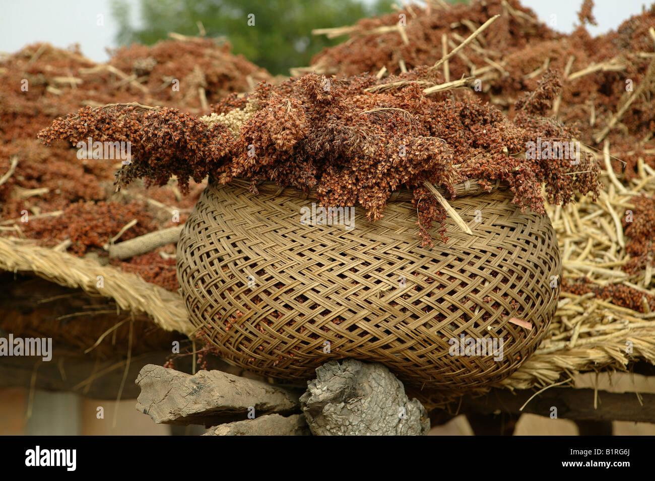 Panier rempli de millet, colis, Cameroun, Afrique Banque D'Images