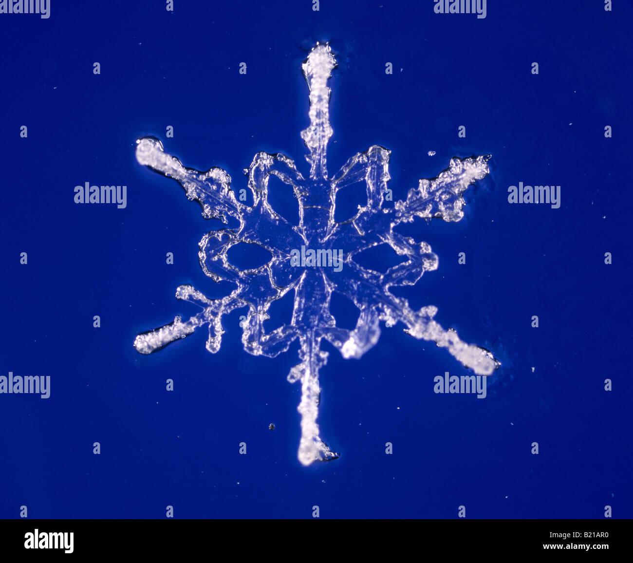 Flocon de neige en cristal forme dendrite Photo Stock