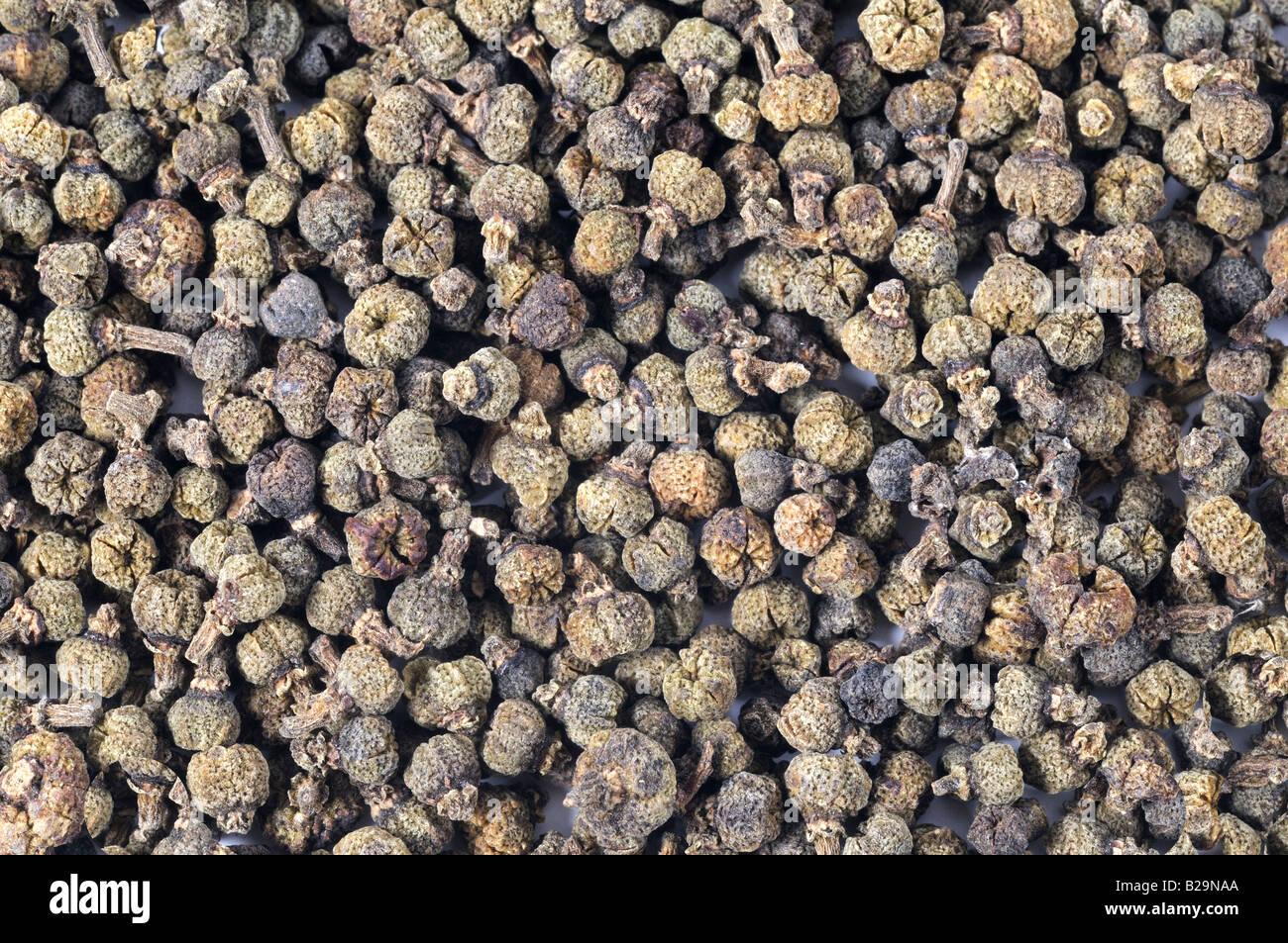Evodia médicinales Fruits / Wu Zhu Yu Photo Stock