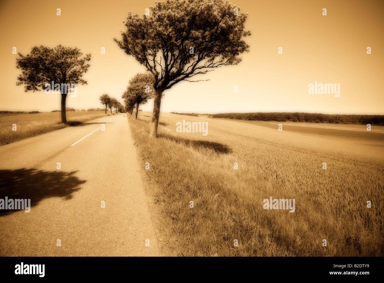 Route bordée d'arbres avec jeu d'Orton monochrome: une route droite avec un centre blanc et bordé d'arbres à floraison printanière Banque D'Images