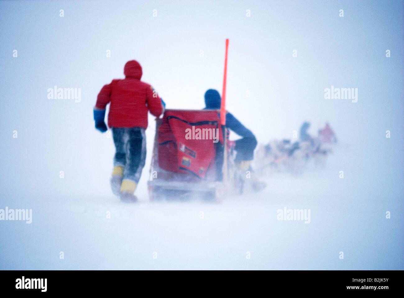 Les explorateurs de l'Arctique voyagent dans un blizzard sur un traîneau tiré par des chiens esquimaux Banque D'Images