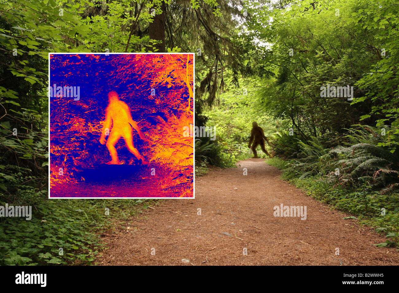 L'analyse d'image thermique Bigfoot Photo Stock