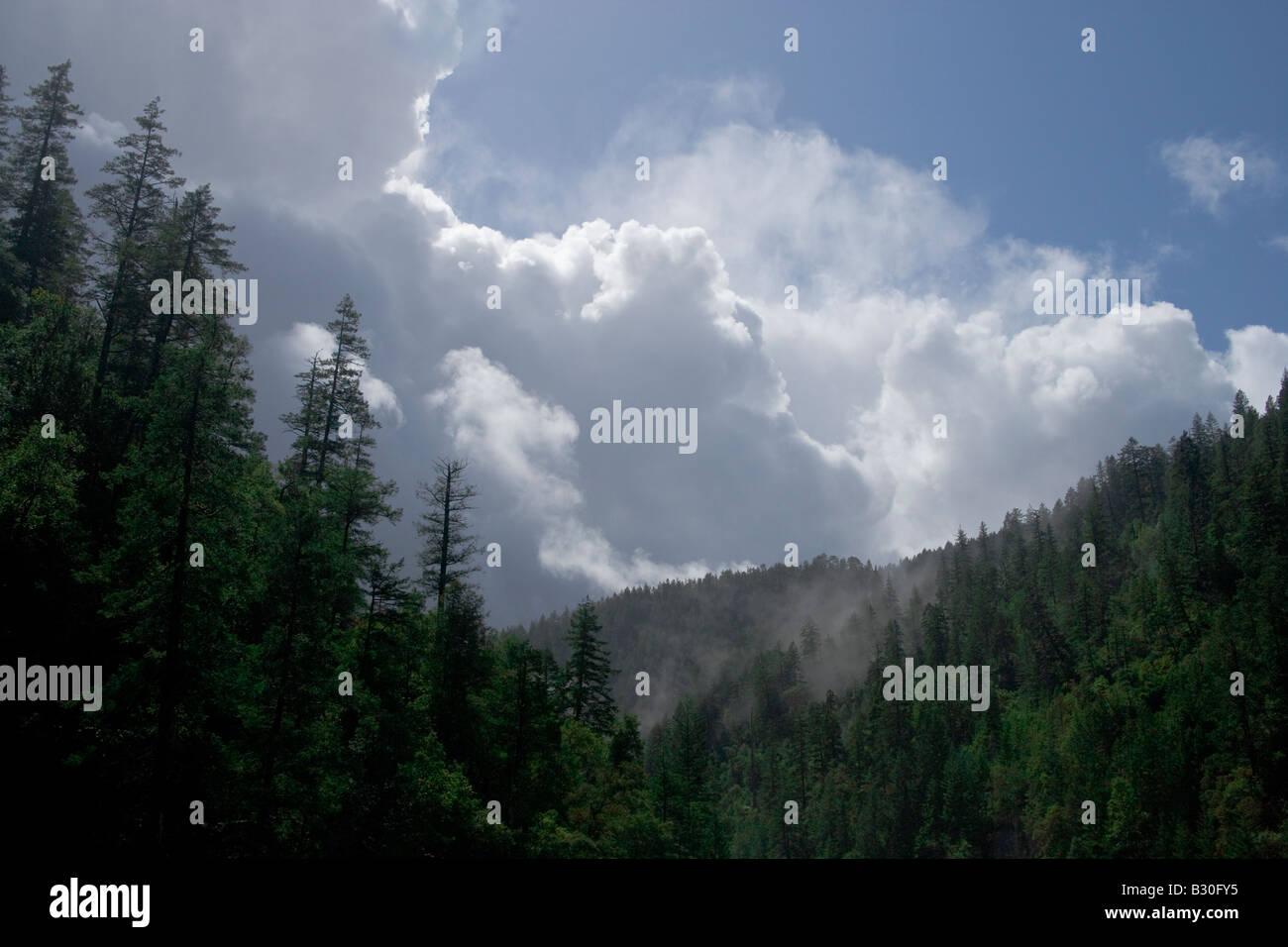 Dissiper les nuages et la brume s'élève de la forêt dans le nord de la Californie montagnes Siskiyou Photo Stock