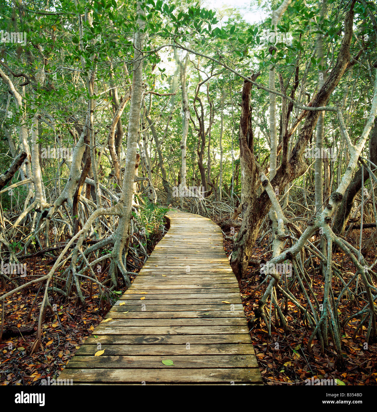 Promenade en bois, J.N. 'Ding' Darling National Wildlife Refuge, Sanibel Island, Floride, USA Photo Stock