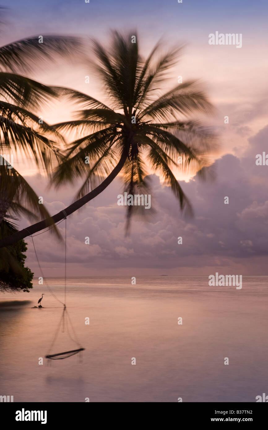 Rope swing au crépuscule sur South Ari Atoll Maldives près de l'Inde Banque D'Images