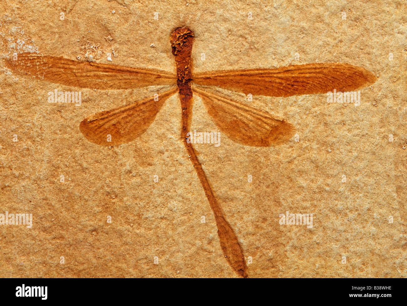 Réplique de libellule fossile du Jurassique supérieur aequalis Stenophlebia Bavière Photo Stock