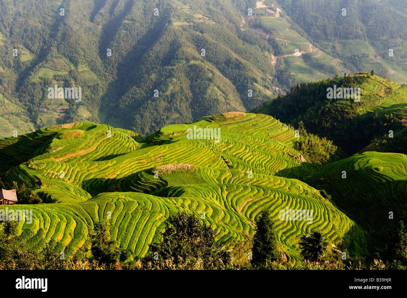 Les rizières en terrasses de LongJi incroyable dans le Guangxi Chine Photo Stock