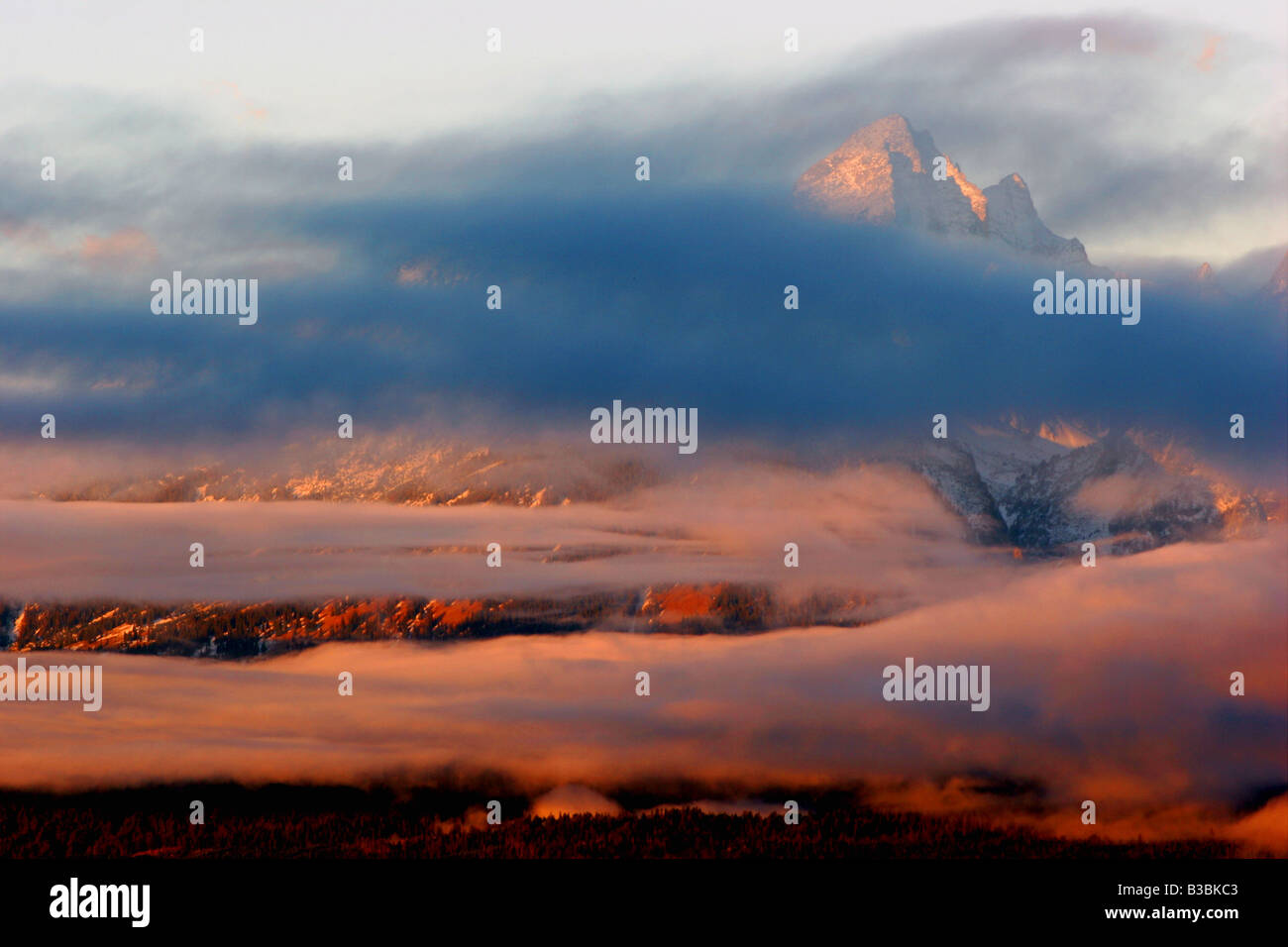 Matin brouillard, parc national de Grand Teton, Wyoming Banque D'Images