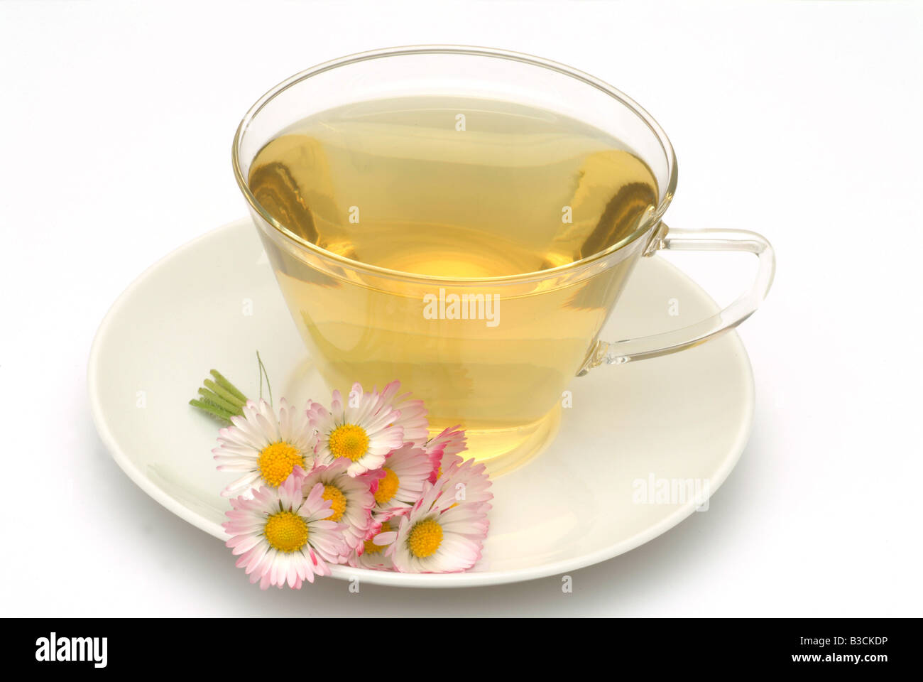 Faite de thé médicinal fleurs fraîches Daisy et tasse de thé herb plante médicinale Margheritina Photo Stock