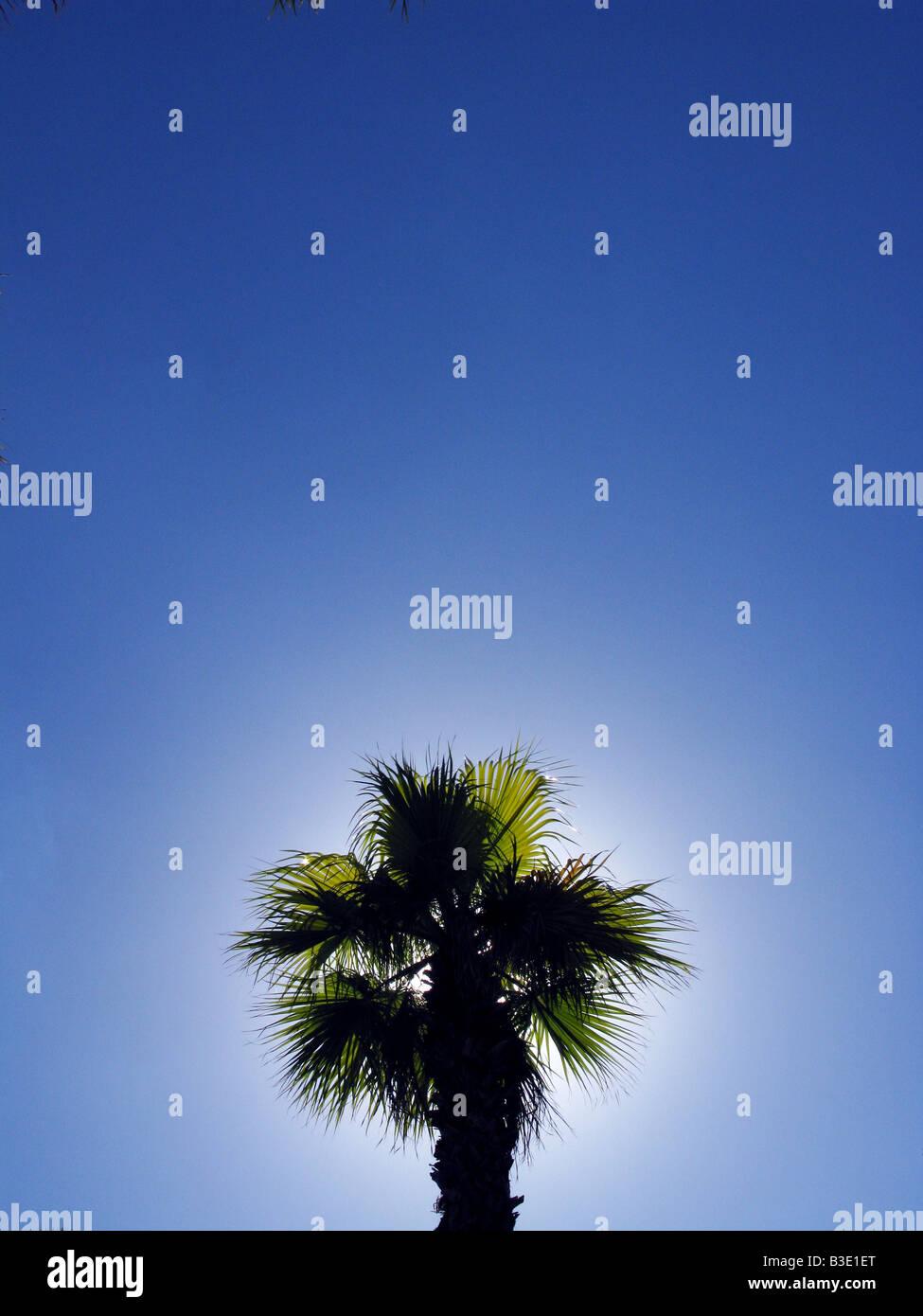 Le haut d'un palmier dans le ciel bleu clair Photo Stock