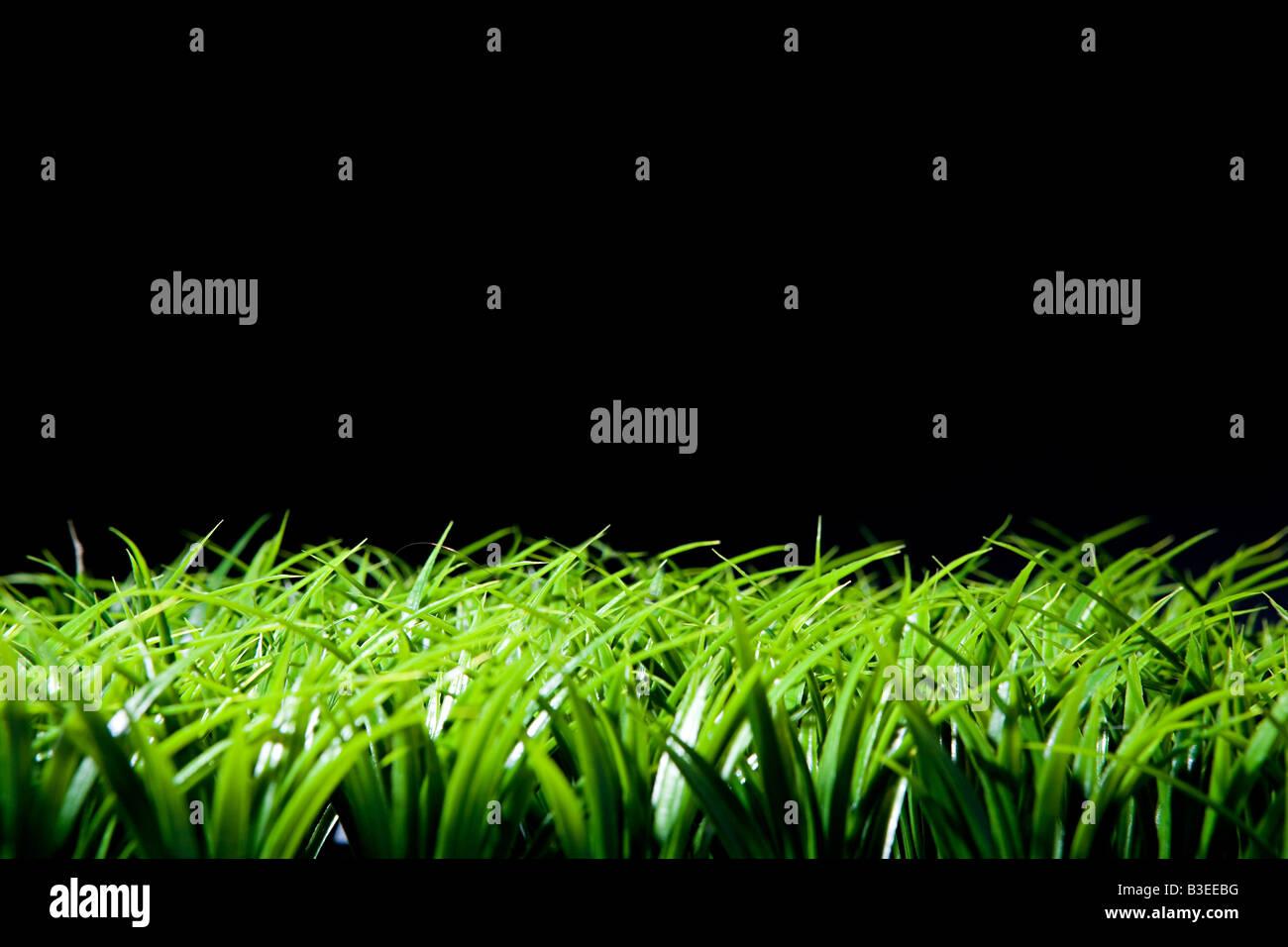 L'herbe et fond noir Photo Stock