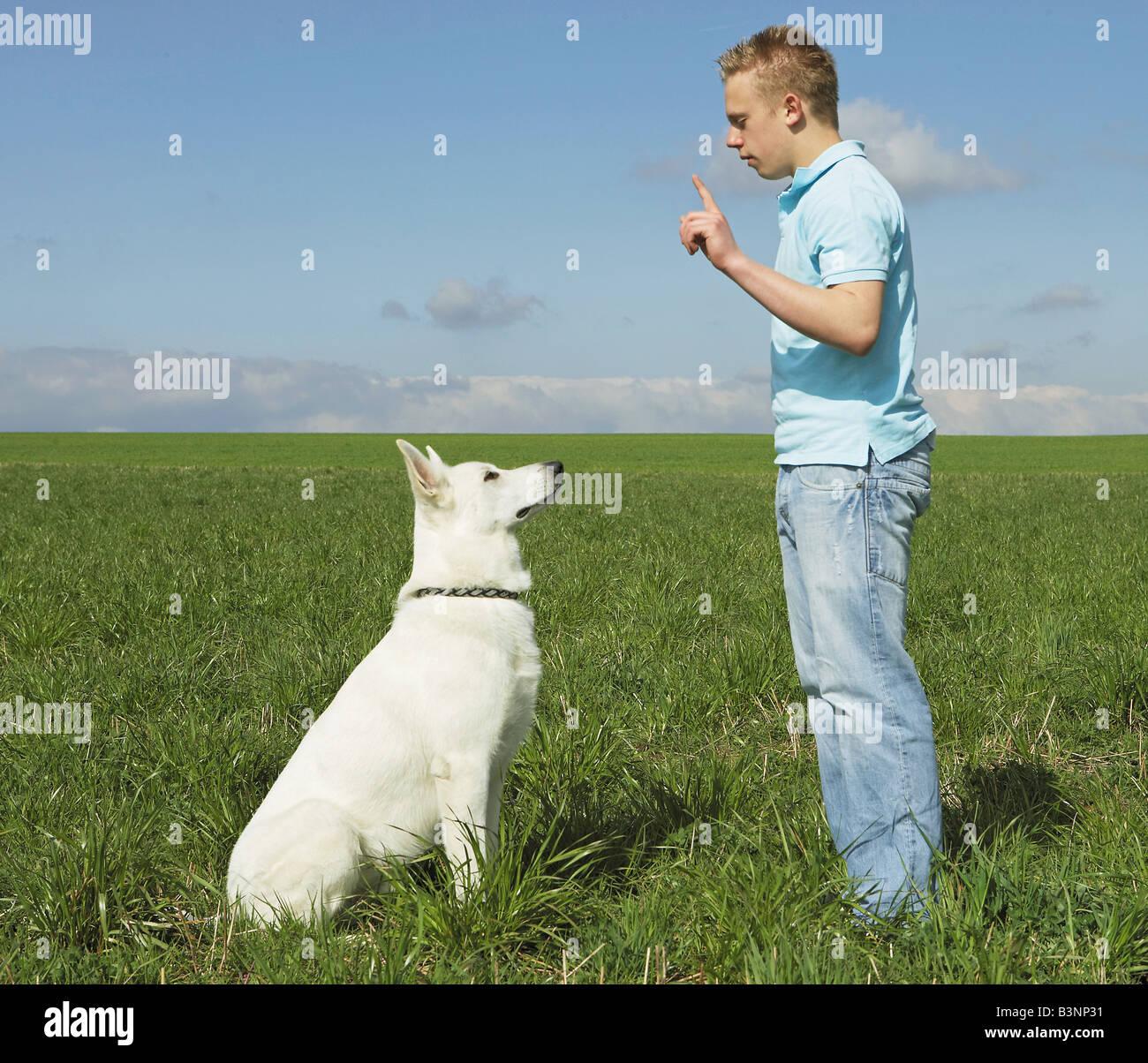 """L'éducation: garçon et chien berger blanc suisse - chien """"vers le bas"""" / Photo Stock"""