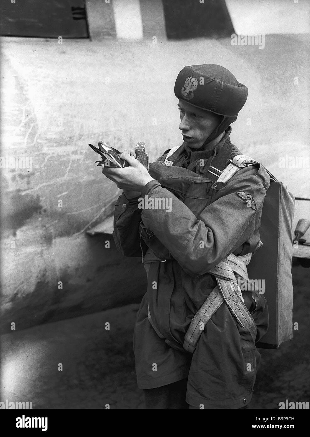 Band of Brothers Un-soldat-pendant-la-seconde-guerre-mondiale-tenant-un-pigeon-voyageur-b3p5ch