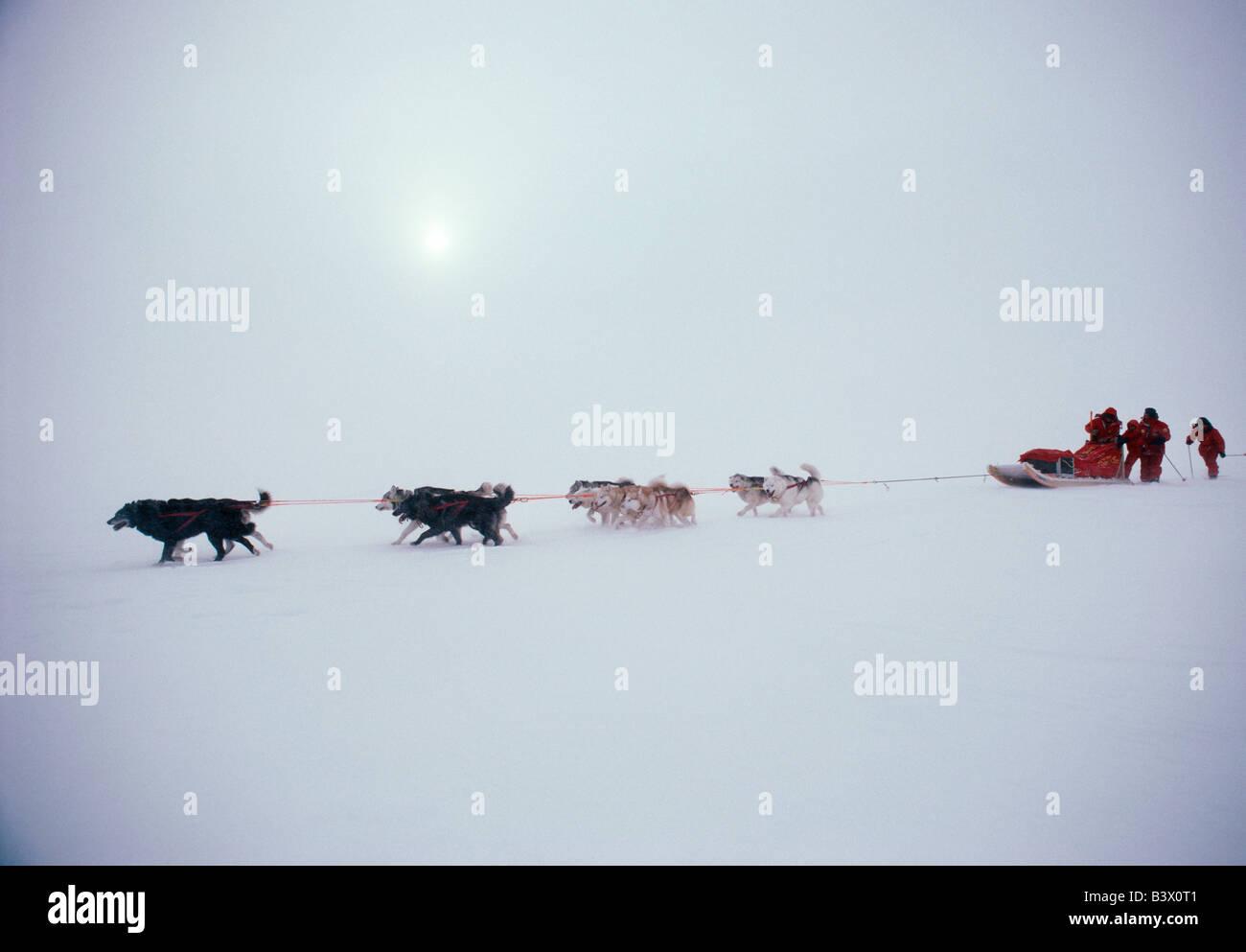 Traîneaux à chiens et mushers dans le blizzard la formation pour l'expédition polaire internationale Steger 1986 Banque D'Images