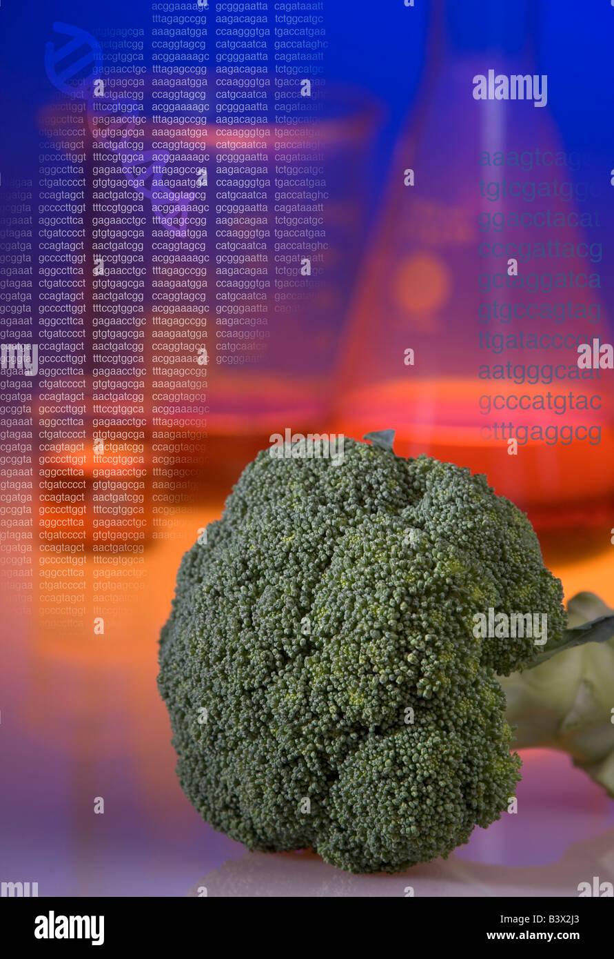 Concept d'organismes génétiquement modifiés le brocoli shot montrant béchers et séquence Photo Stock