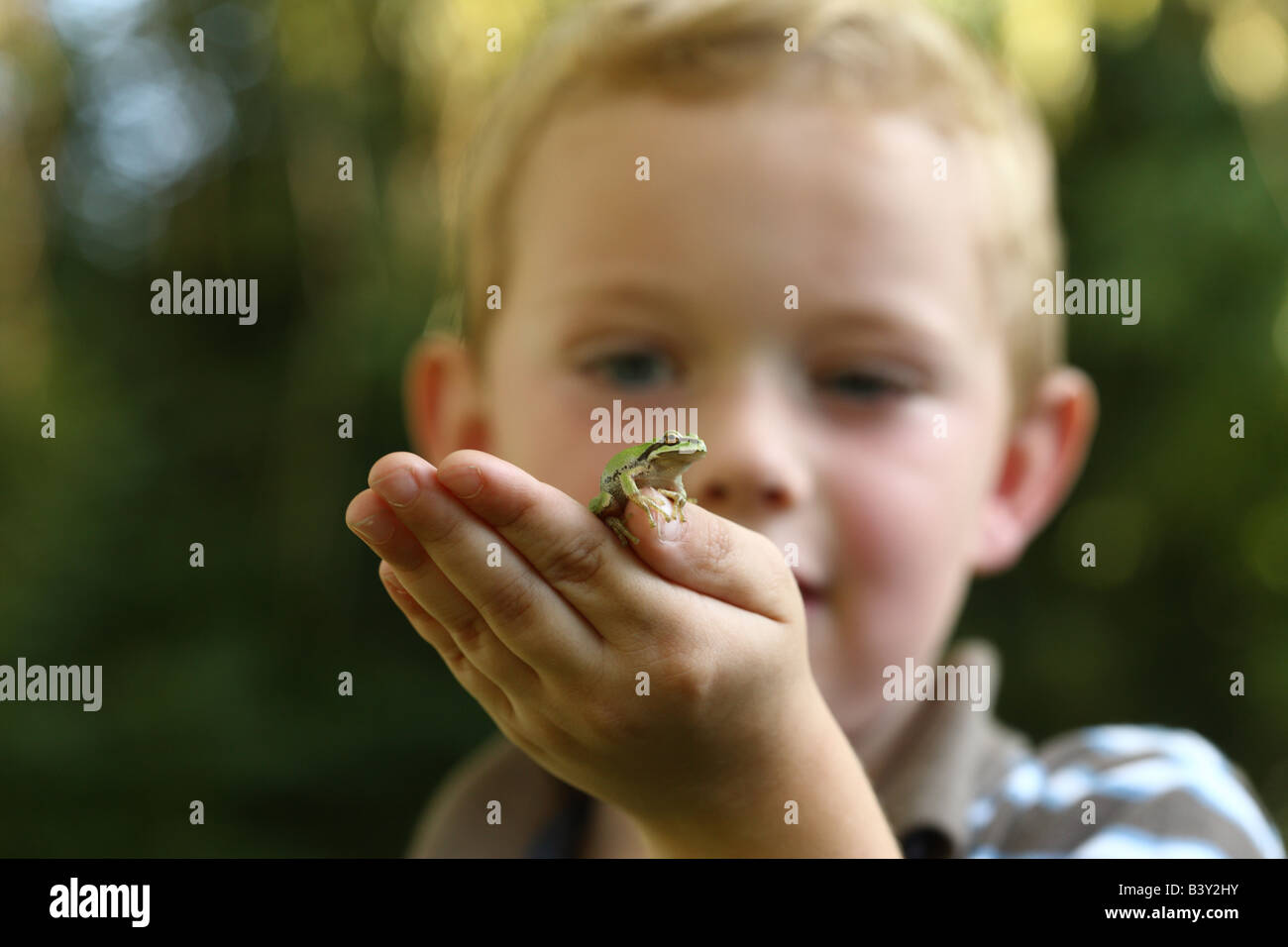 Young boy holding small tree frog Banque D'Images