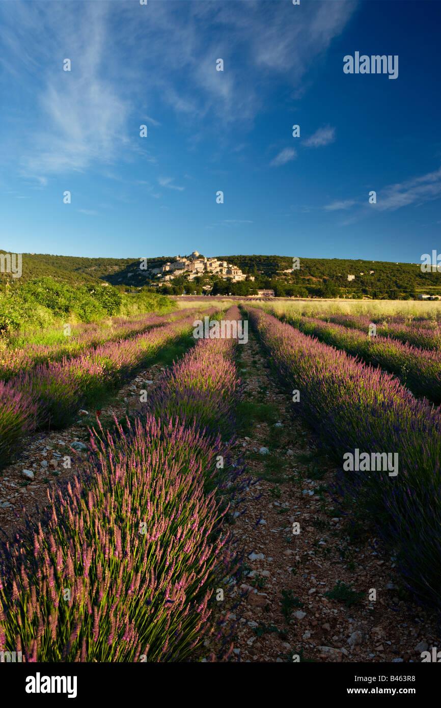Rangées de lavande dans un champ avec le village de Simiane-la-Rotonde au-delà, le Vaucluse, Provence, Photo Stock