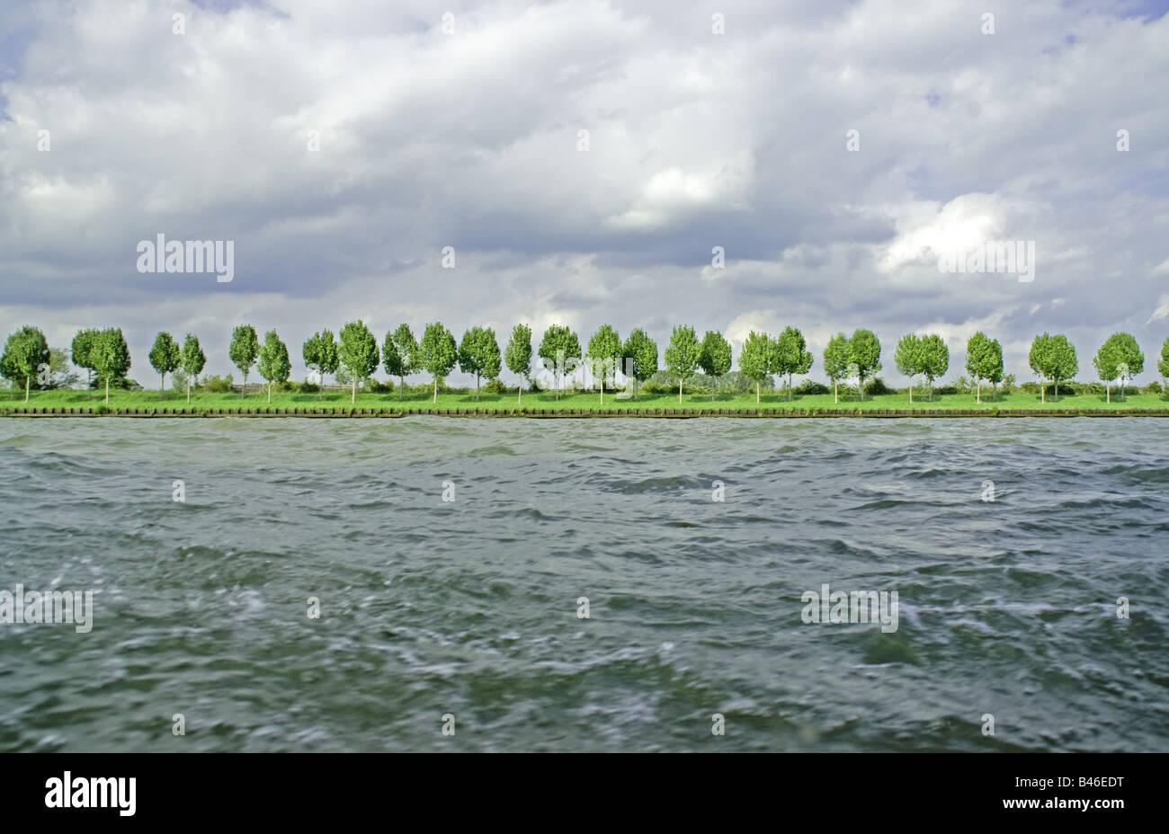 Les peupliers bordant le Canal Amsterdam-Rhine Photo Stock