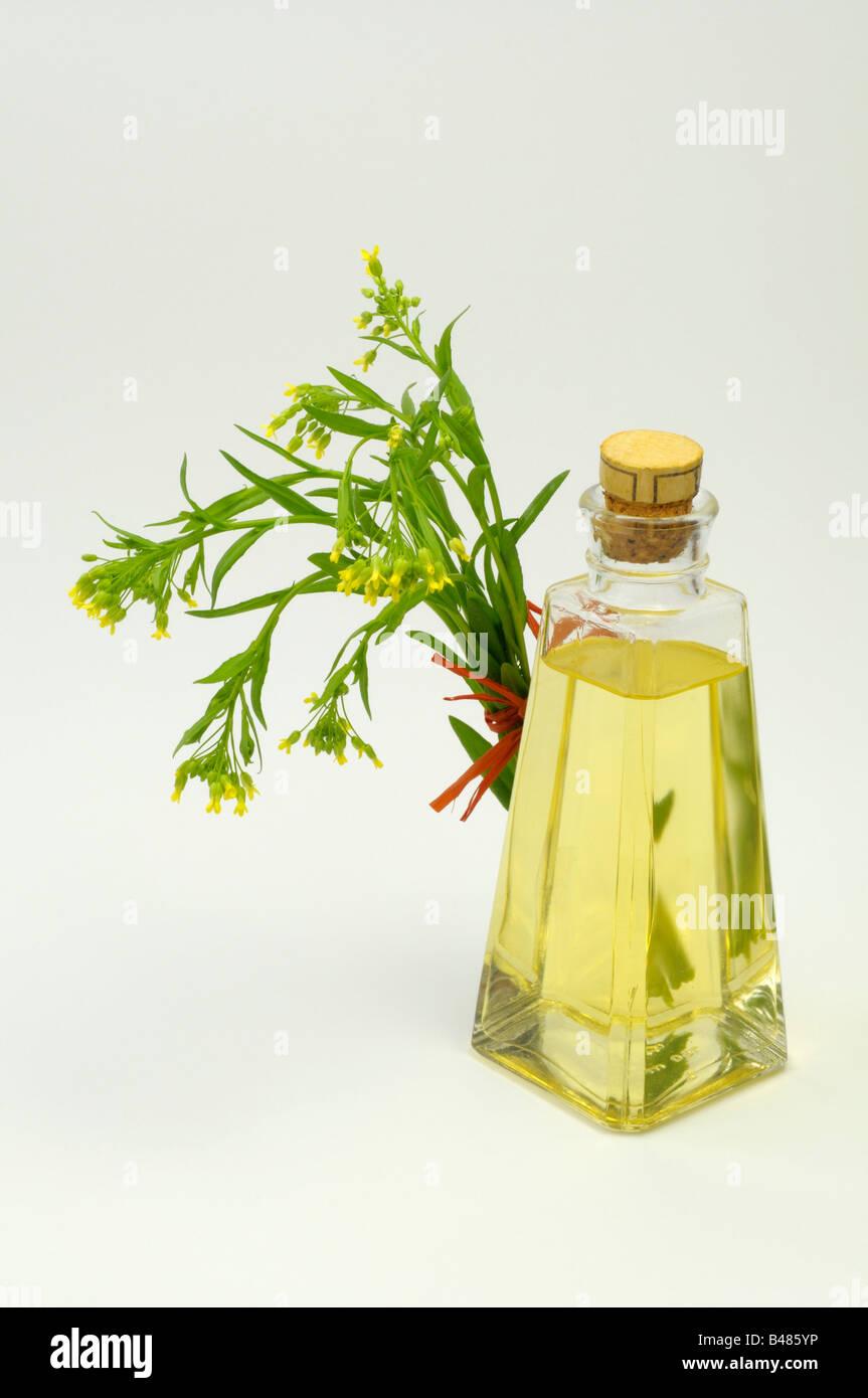 Bigseed Faux Lin Lin Sauvage Camelina Sativa Tiges A Fleurs Et