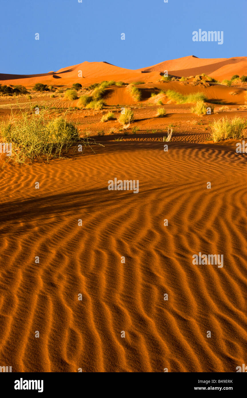 Dunes de sable dans le Namib-Naukluft National Park, Namibie Photo Stock