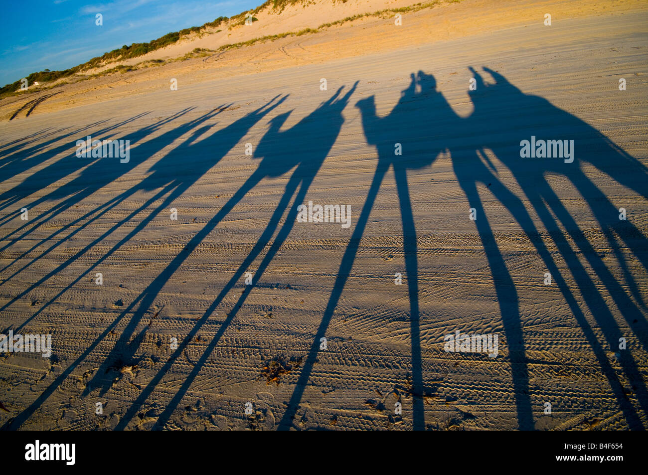 L'équitation de chameau au coucher du soleil sur la plage Cable Broome Australie Occidentale Photo Stock