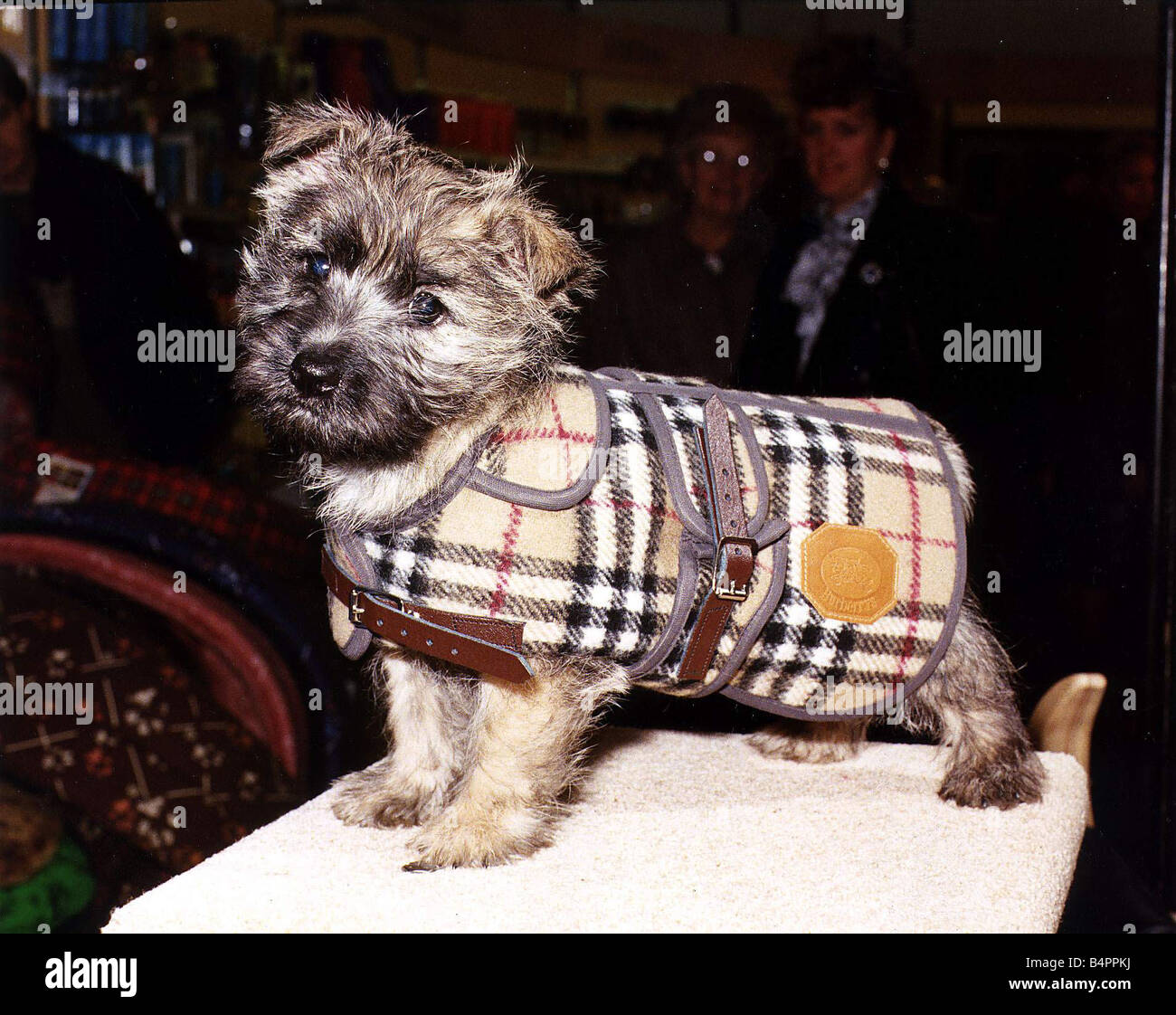 027925bc2c322 Burberry manteau pour chien en 43 circa 1995 Photo Stock