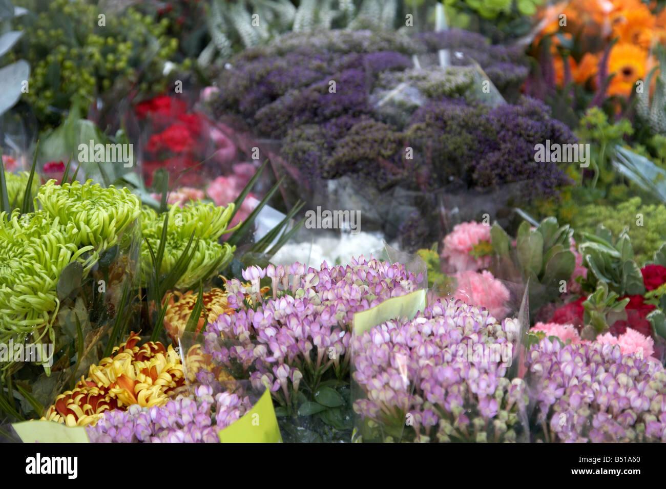 Variété de fleurs à vendre à Columbia Road Flower Market, Shoreditch Photo Stock