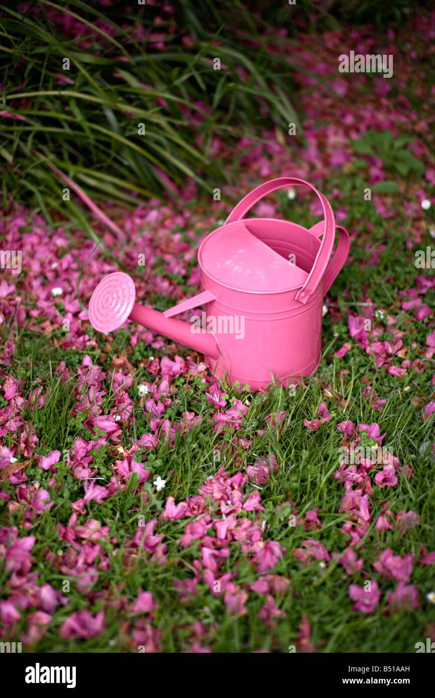 Arrosoir rose Banque D'Images