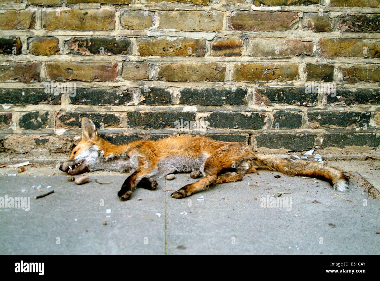 Un jeune urbain morts gisant sur la chaussée fox à Hackney Photo Stock