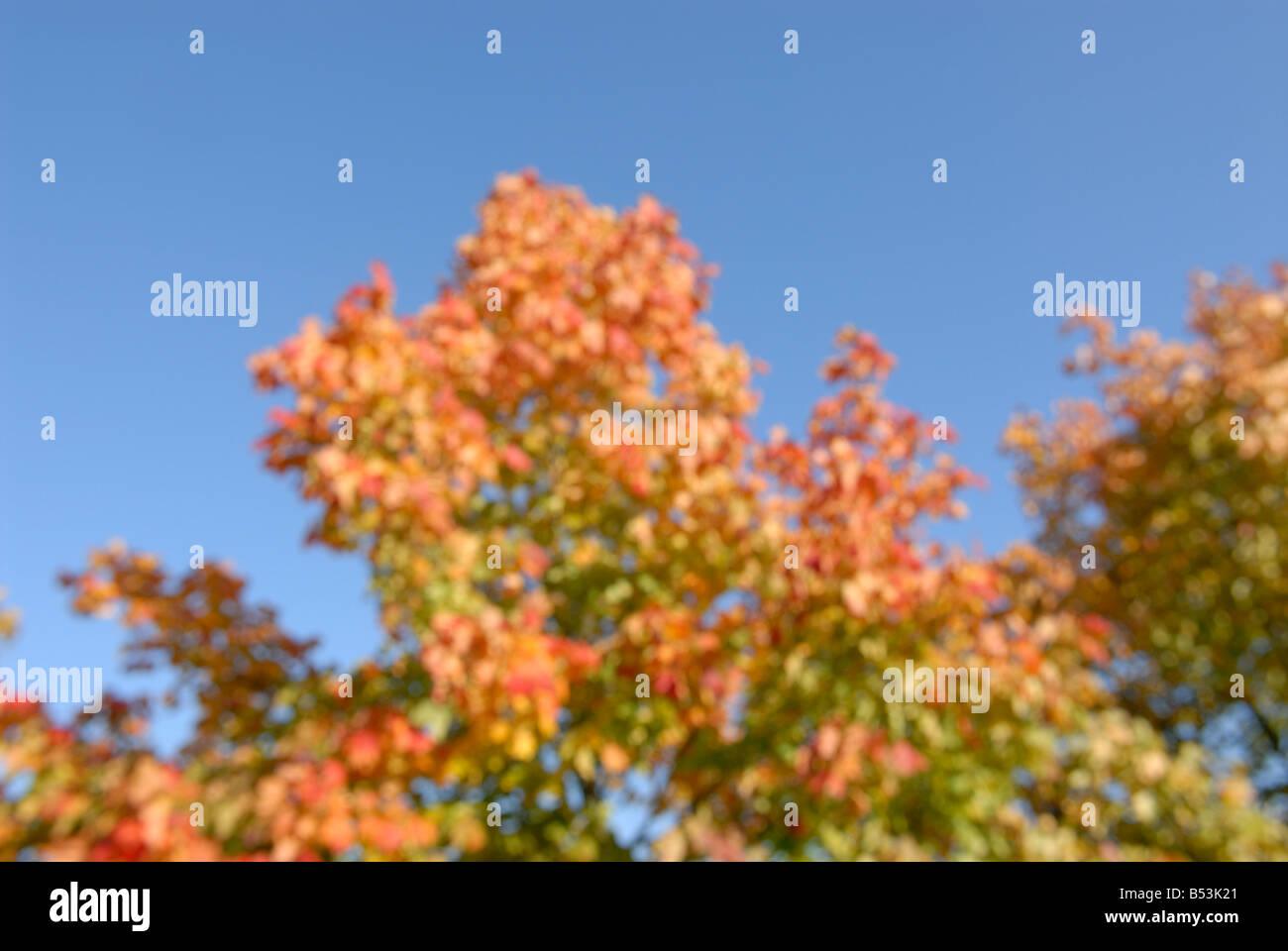 L'automne de flou artistique Banque D'Images