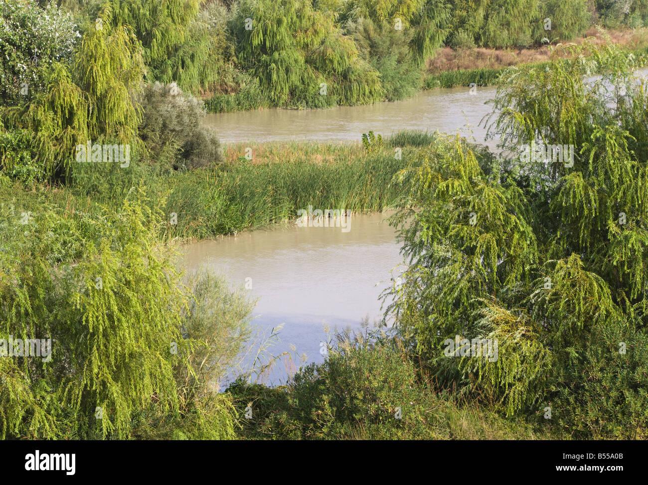 Feuillage vert luxuriant sur les bords de la rivière Photo Stock