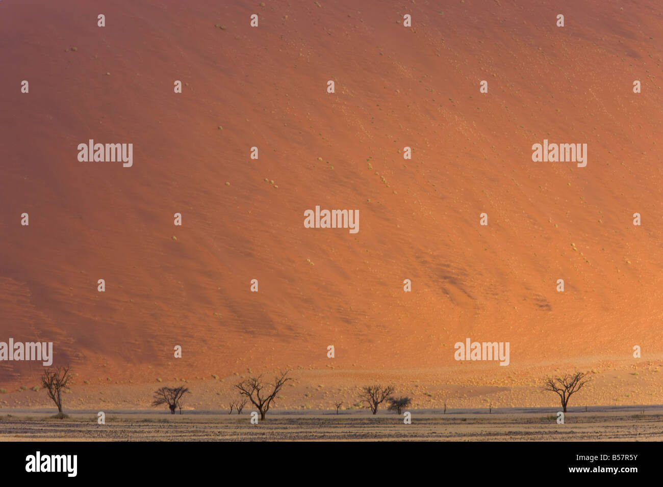 Dunes de sable, Sossusvlei, Namib Naukluft Park, Désert du Namib, Namibie, Afrique Photo Stock