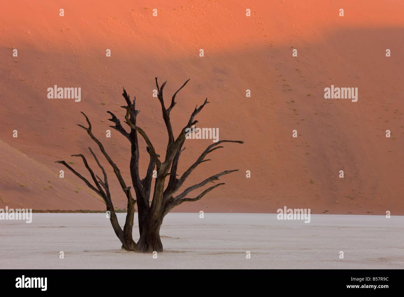 Dead Vlei, Sossusvlei, Désert du Namib, Namibie, Afrique Photo Stock