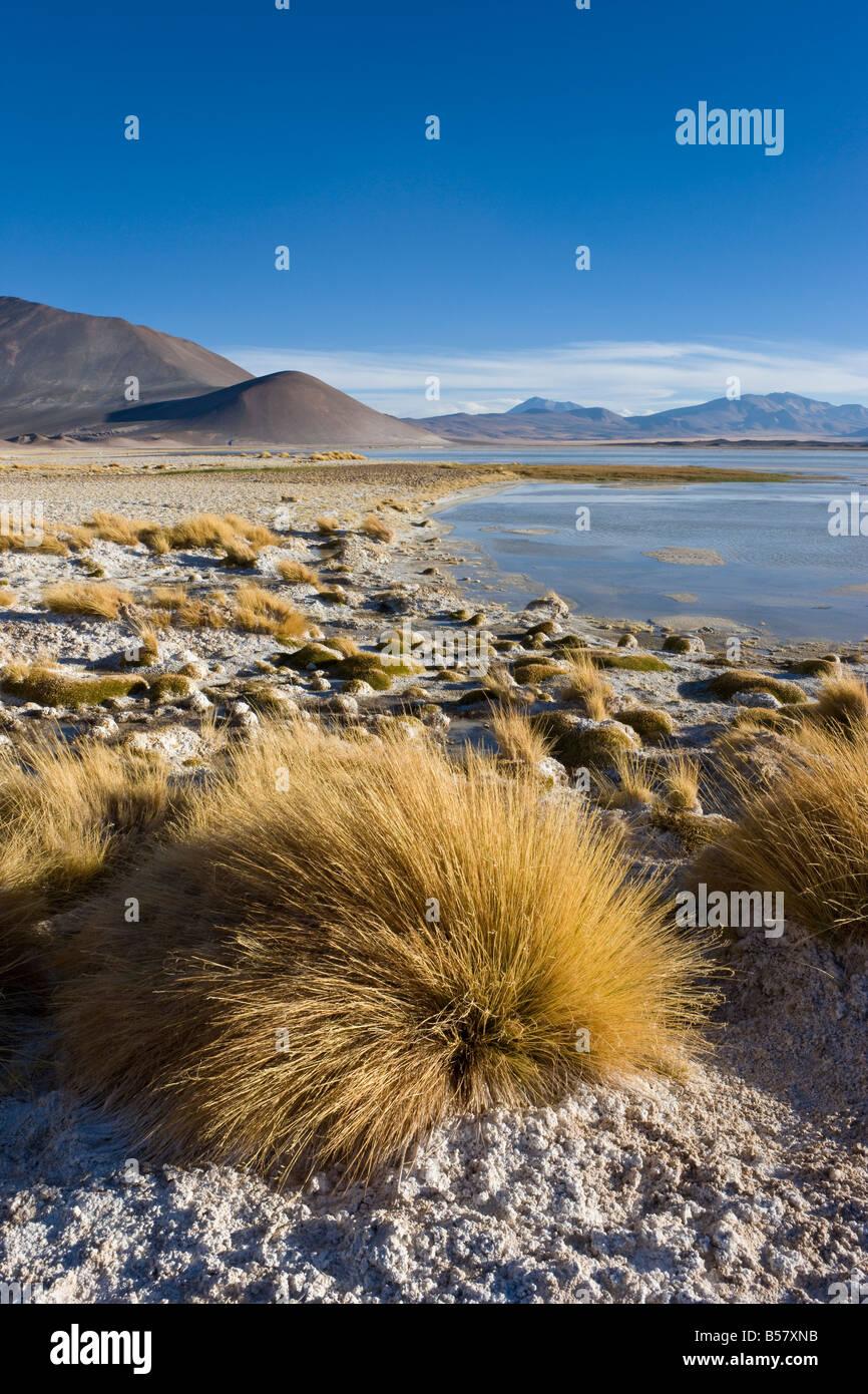 Altiplano, réserve nationale Los Flamencos, Désert d'Atacama, région d'Antofagasta, Norte Photo Stock