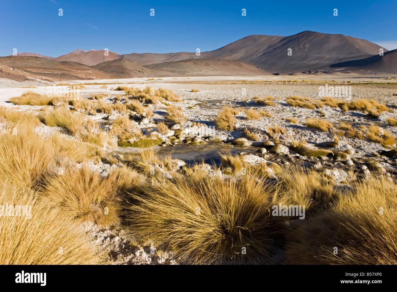 Altiplano, réserve nationale Los Flamencos, Désert d'Atacama, région d'Antofagasta, Chili Photo Stock
