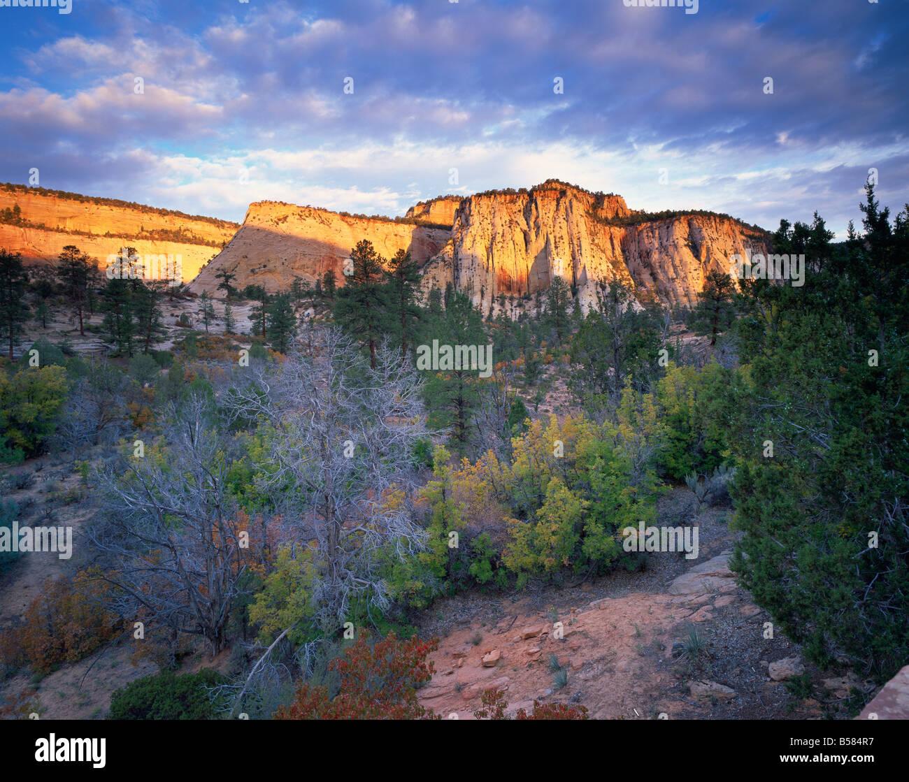 La première lumière sur les collines, Zion National Park, Utah, États-Unis d'Amérique, Amérique Photo Stock