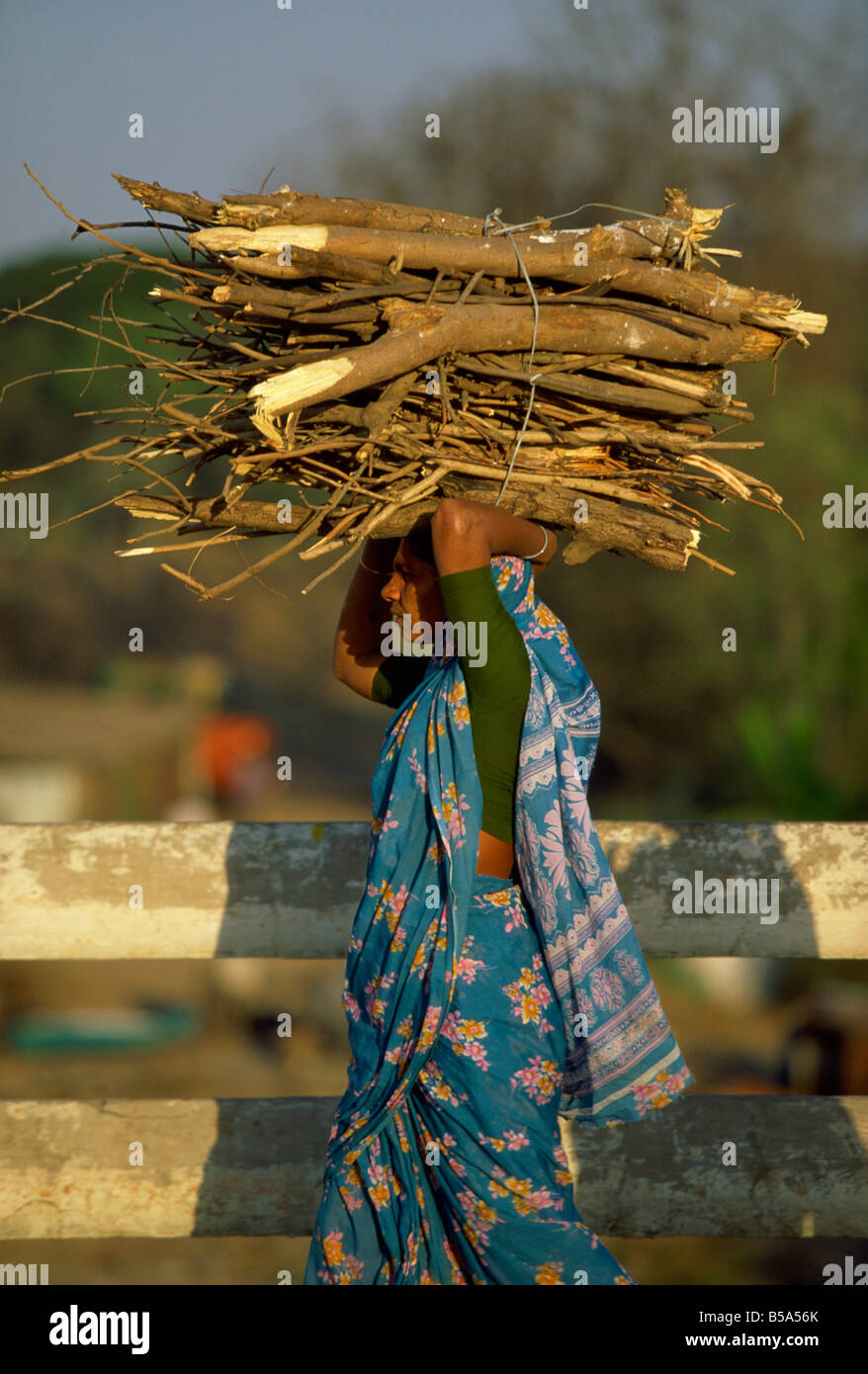 Femme transportant du bois de chauffage, Pune, Maharashtra, Inde l'état Banque D'Images