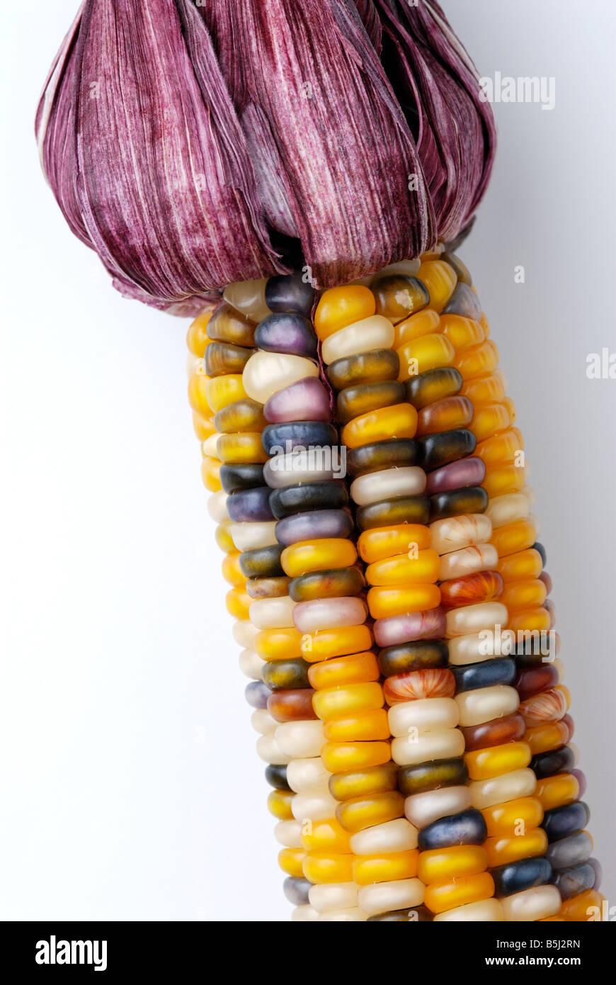 Coloré le maïs, maïs Photo Stock