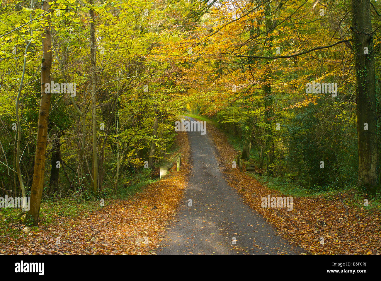Country lane road à pied england uk automne Photo Stock