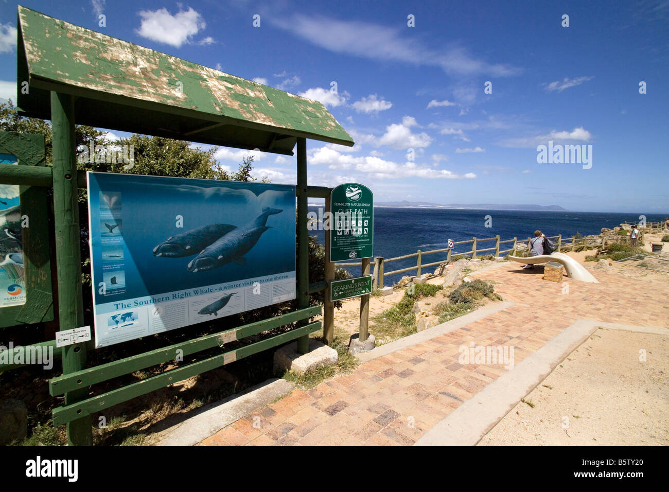 Sur l'affiche de l'enseignement Eubalaena australis Hermanus Walker Bay Afrique du Sud Photo Stock
