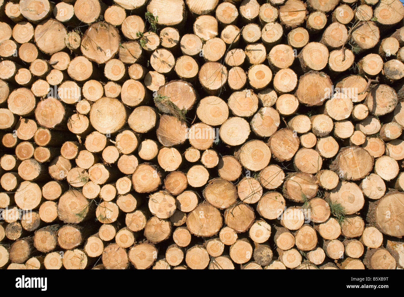 Pile de grumes d'arbres Photo Stock