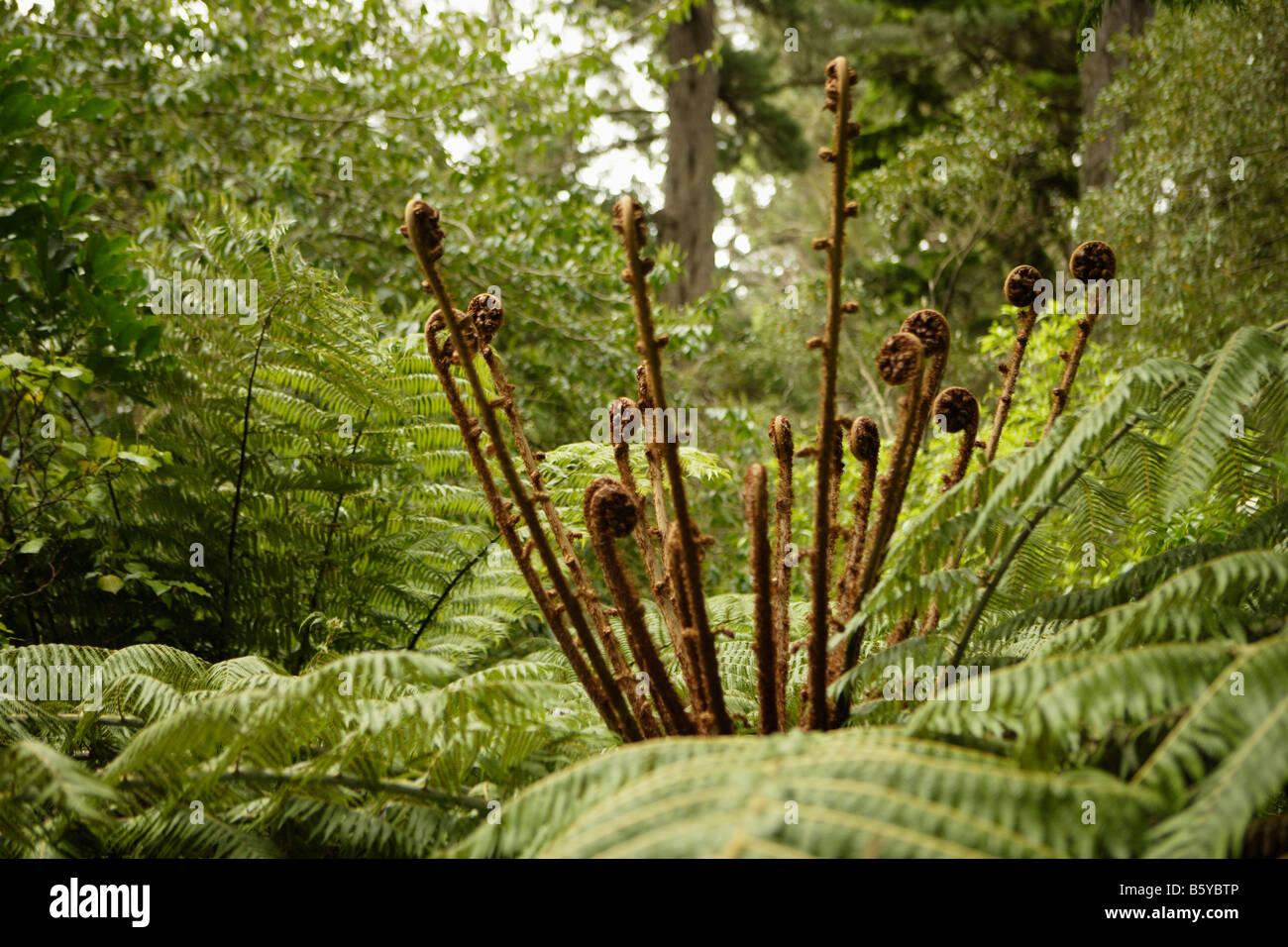 Fren arbre Jardin Botanique Wellington Wellington New Zealand Banque D'Images