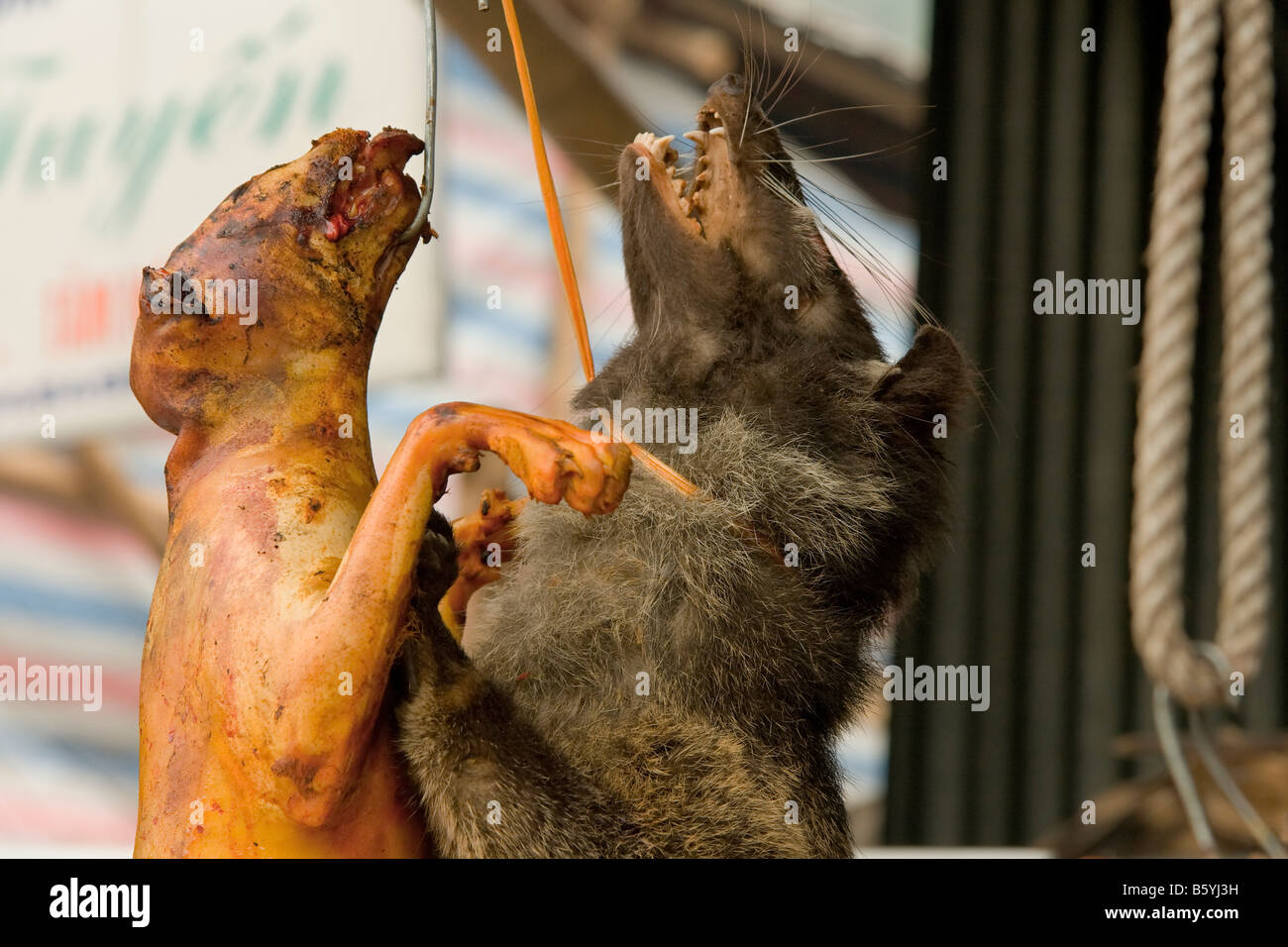 Vietnam statue chien pendu corde mur alimentaire Photo Stock