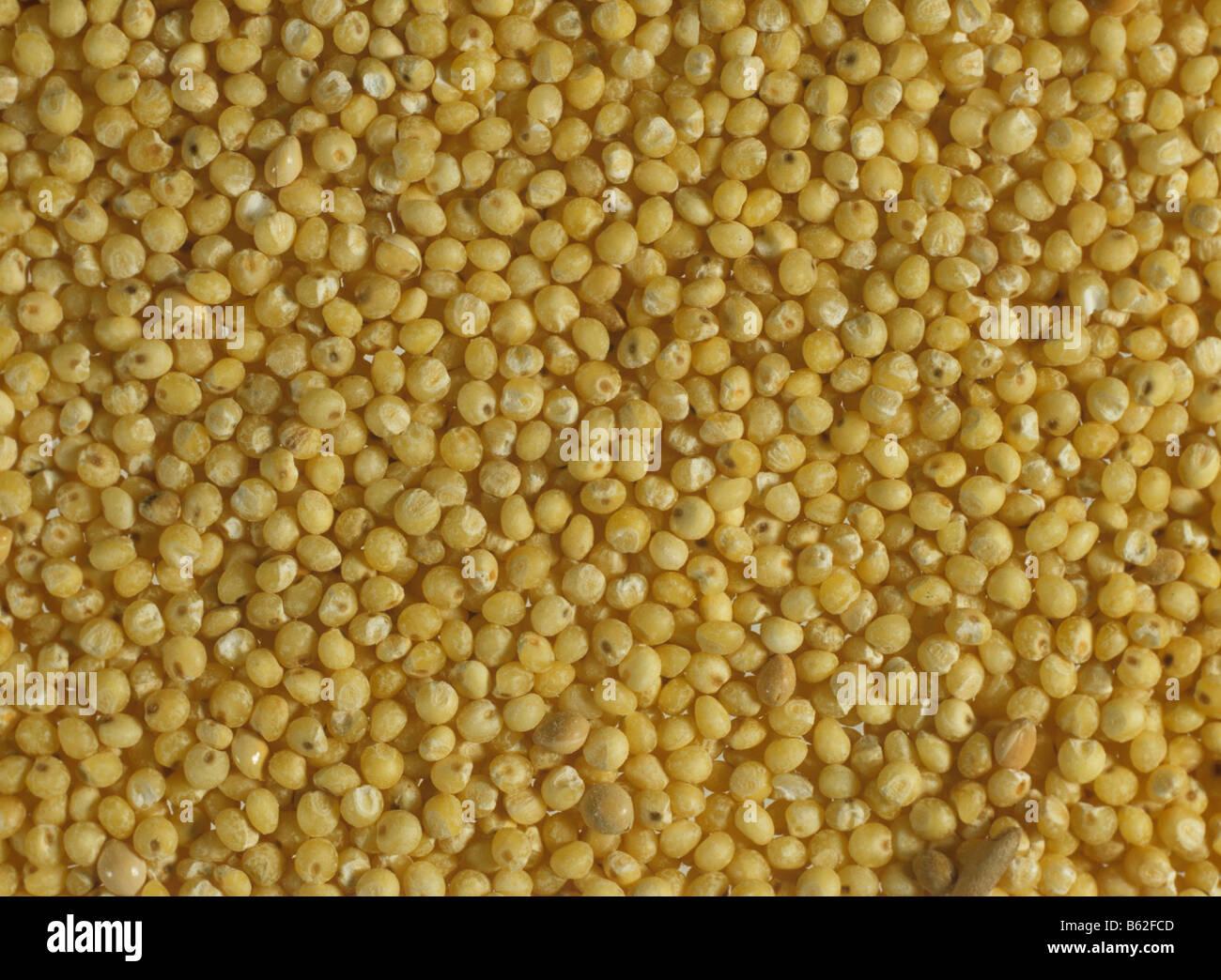 Graines de millet Eleusine coracana à partir d'un magasin de santé Photo Stock