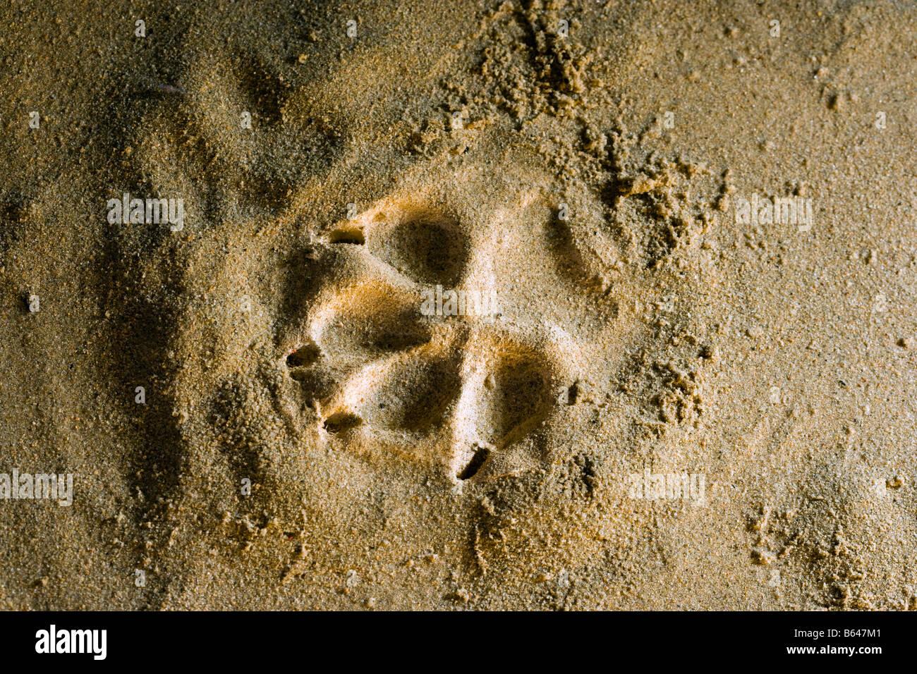 La Finlande, Kuhmo, Petola Centre d'accueil. Informations sur la plus grande des carnivores et preditors. Empreinte Photo Stock