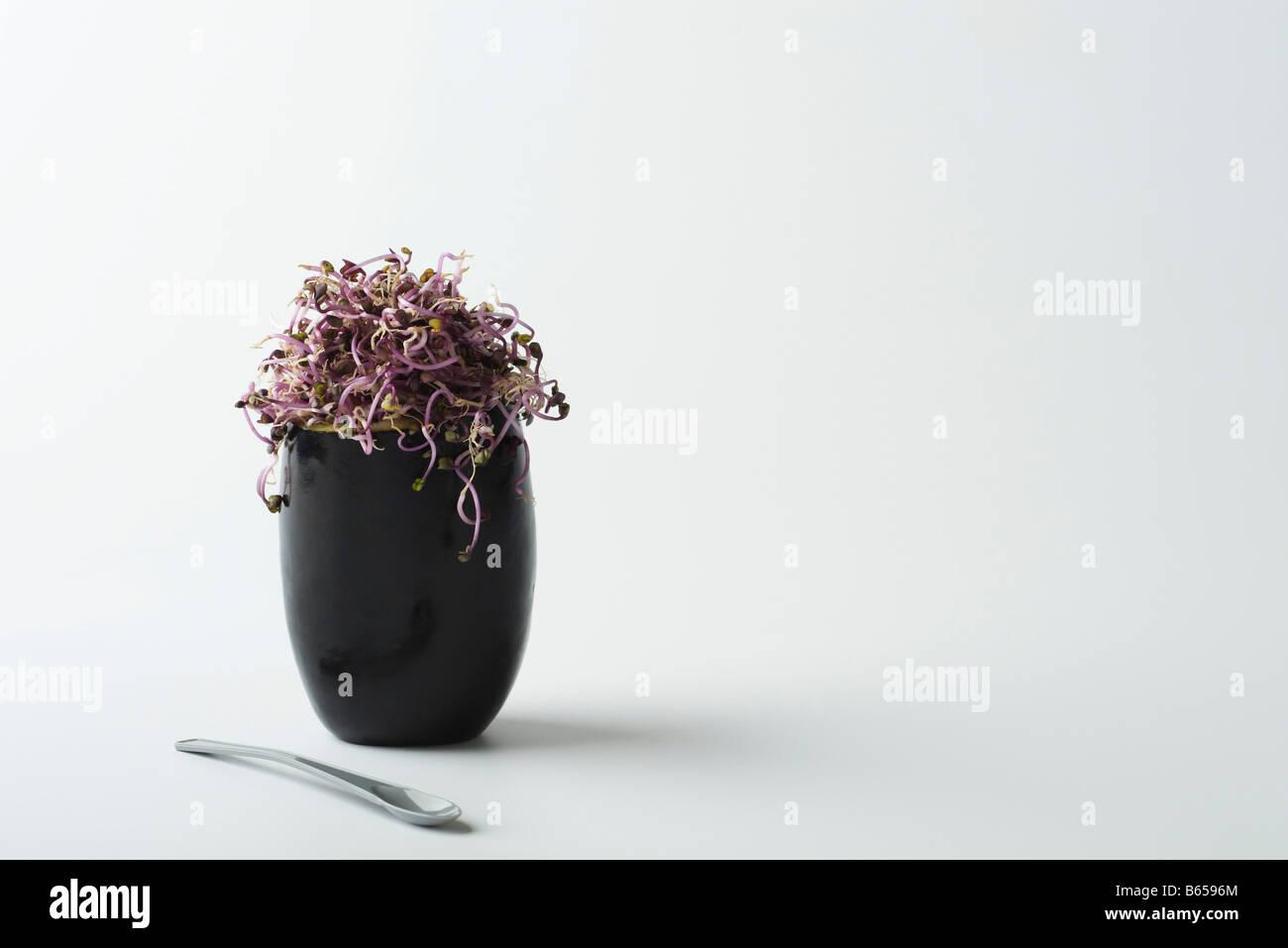 Aubergine farcis de pousses de radis Photo Stock