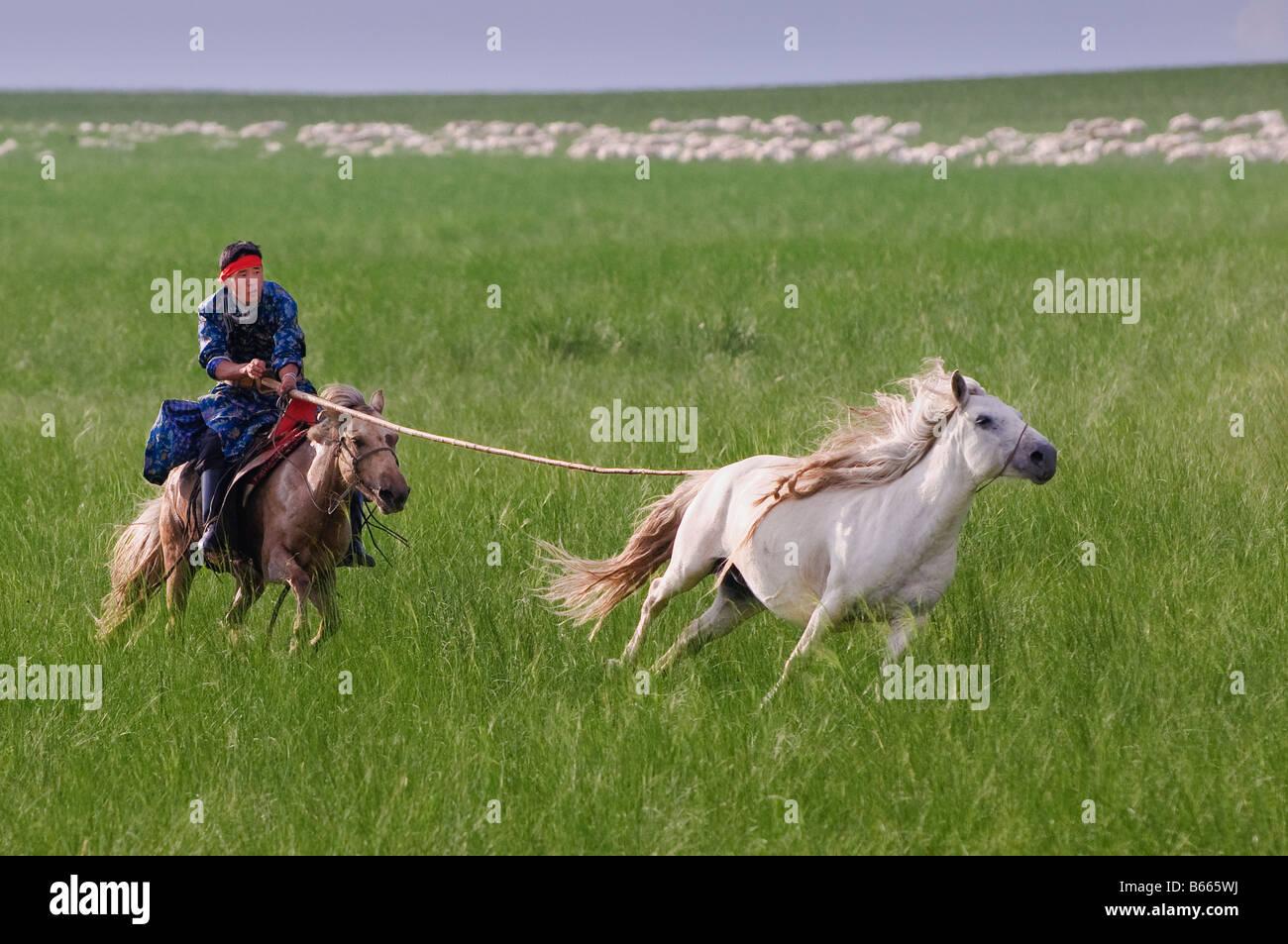 Berger des prairies à cheval cheval captures avec corde et urga pôle Xilinhot Chine Mongolie Intérieure Photo Stock