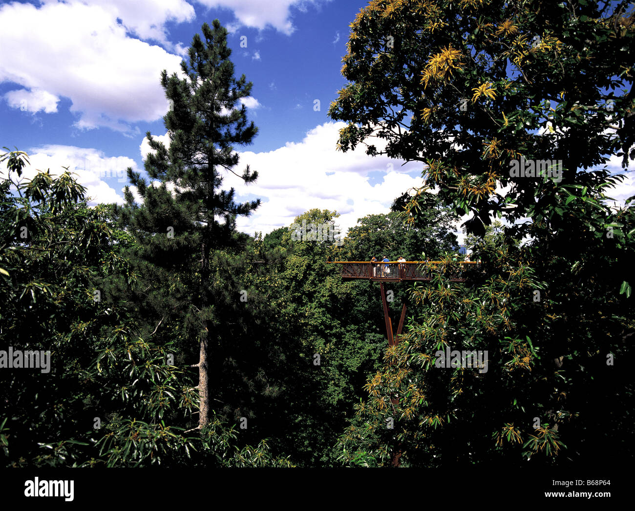 Rhizotron et Xstrata Treetop Walkway au Royal Botanical Gardens Kew Richemond London England Photo Stock
