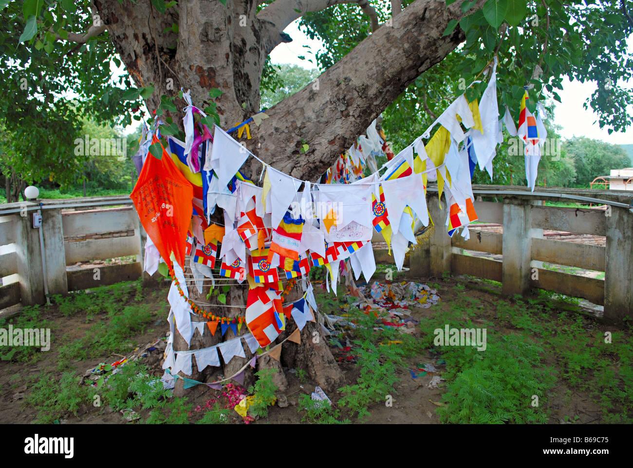 Arbre des désirs, à l'extérieur de Sanchi Stupa, Sanchi, Madhya Pradesh. Banque D'Images