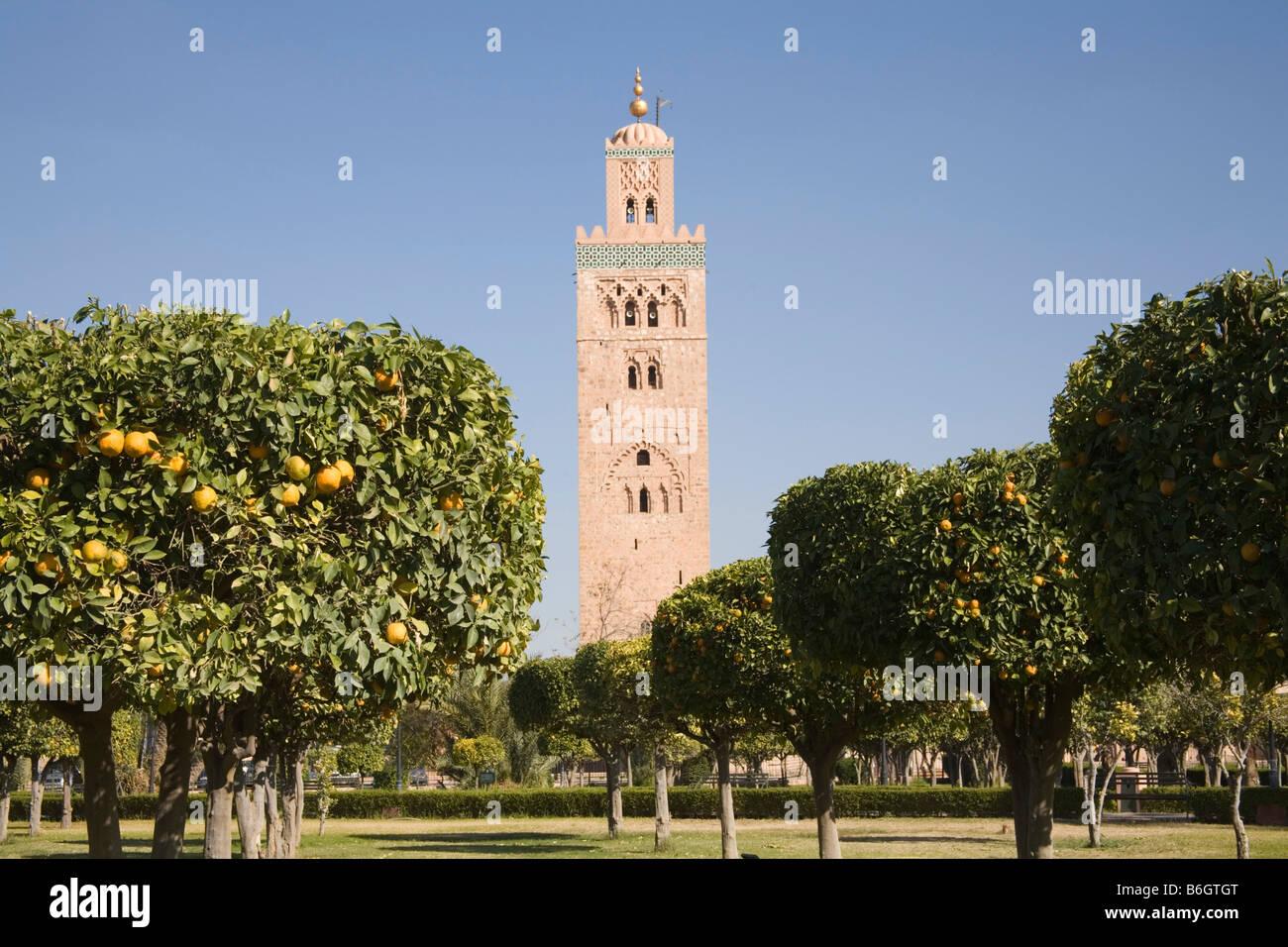 Marrakech Maroc Afrique Du Nord De Decembre Une Rangee D Orangers
